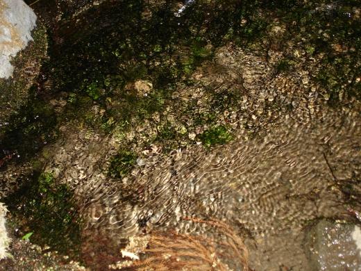 湧き水の写真素材01