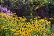 黄色い花の写真素材02