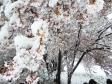 雪が積もった桜の写真素材01
