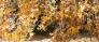 柿の木の写真素材01