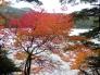 湖と紅葉・もみじの写真素材01