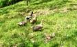 鴨の写真素材01