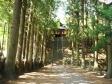 杉の木の写真素材02