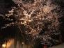 夜桜の写真素材01