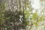 コブシの木とコケの写真素材01
