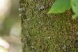 コブシの木とコケの写真素材02