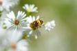 ハチの写真素材01