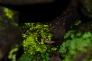 ヒカリゴケの写真素材01