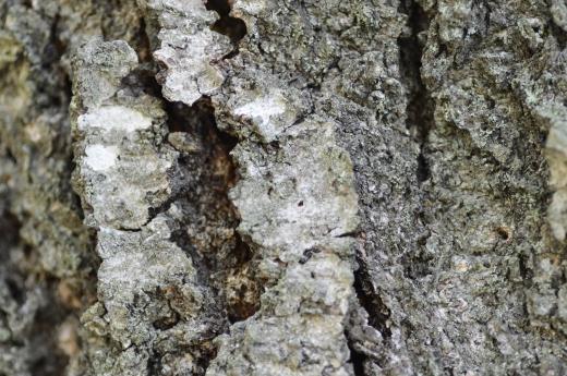 松の樹皮の写真素材01