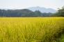稲・お米の写真素材02
