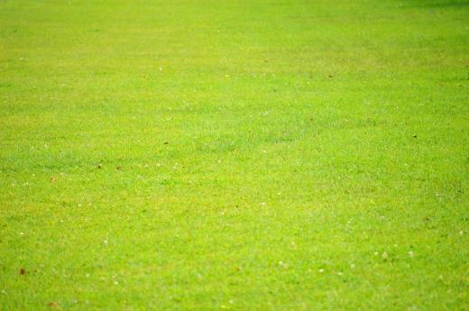 芝生の写真素材01