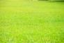 芝生の写真素材02