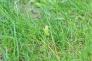 草の中にいるカエルの写真素材