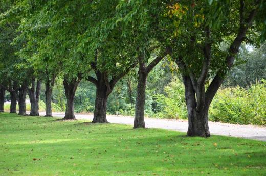 枯れ葉が落ちる並木道の写真素材01