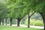 枯れ葉が落ちる並木道の写真素材02