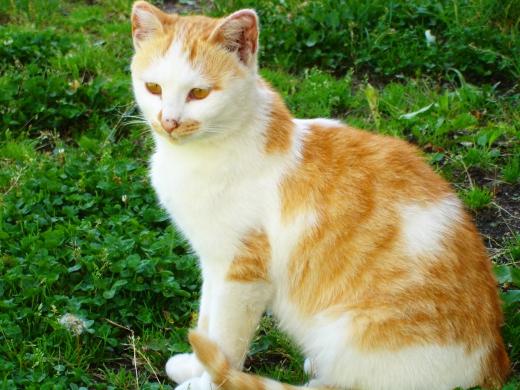 猫の写真素材01