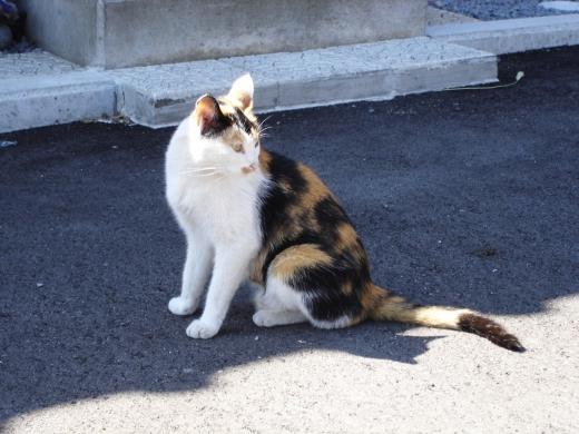 猫の写真素材02
