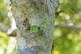コブシの木の写真素材01