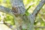 コブシの木の写真素材02