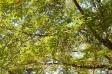 森林の写真素材01