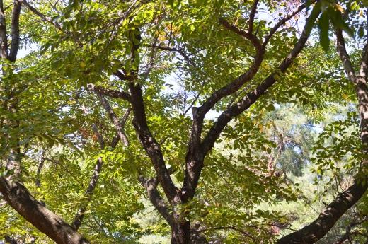 森林の写真素材02
