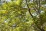 森林の写真素材03