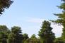 森林と青空の写真素材01