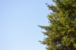 森林と青空の写真素材02