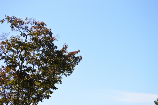 森林と青空の写真素材03