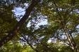 森林と青空の写真素材04