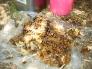 蜂蜜採取の写真素材03
