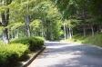公園の散歩道の写真素材02