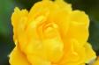 バラの写真素材02