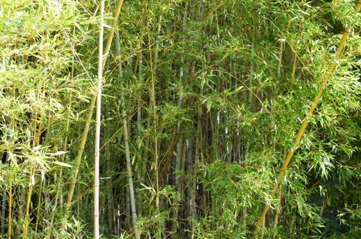 竹藪の写真素材01