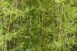 竹藪の写真素材02