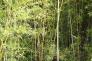 竹藪の写真素材03