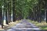 林道の写真素材01