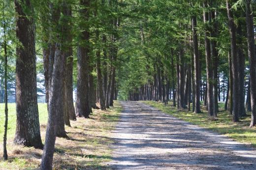 林道の写真素材02