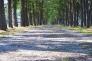 林道の写真素材03