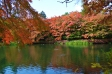 軽井沢・雲場池と紅葉の写真素材02