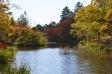 軽井沢・雲場池と紅葉の写真素材05