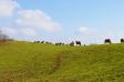 牧場の風景の写真素材01