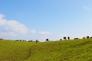 牧場の風景の写真素材02