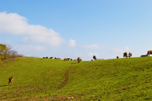 牧場の風景の写真素材03