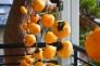 干し柿の写真素材03