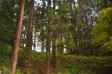 杉の木の写真素材03