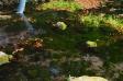 湧き水の写真素材02