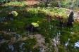 湧き水の写真素材03