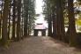 杉の木の写真素材05
