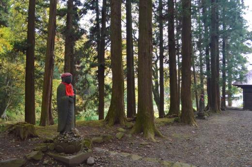 杉の木の写真素材06